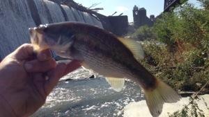 Falls of the ohio bucket list fishing for Falls lake fishing report